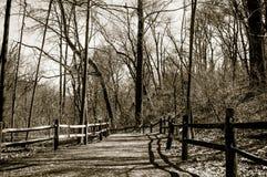 森林方式 免版税图库摄影