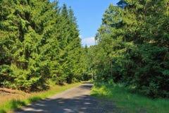 森林方式 图库摄影