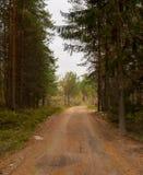 森林旅行在秋天 免版税库存照片