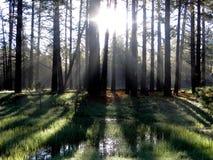 森林日出阴影 库存图片
