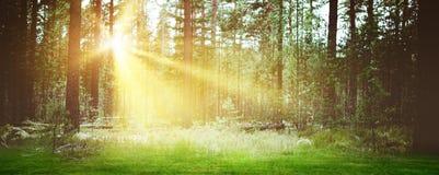 森林日出风景背景早晨 库存图片