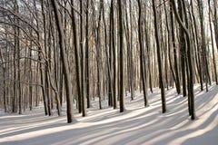 森林日出 免版税库存图片