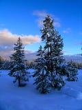 森林日落冬天 免版税库存照片