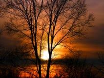 森林日落风景伊利诺伊 库存照片