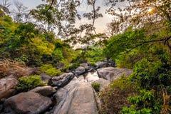 森林日落 免版税图库摄影