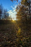 森林日落 库存照片