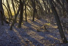 森林早晨发出光线星期日 免版税图库摄影