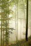 森林早晨美丽如画的光芒星期日 库存图片