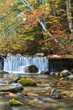 森林春天在秋天 库存图片