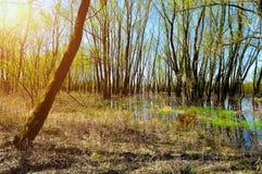 森林春天风景-一点森林充斥了与在晴朗的春天天气的溢出的泉水 库存照片
