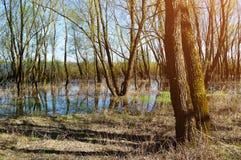 森林春天风景-一点森林充斥了与在晴朗的春天天气的溢出的泉水 免版税库存图片