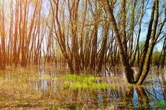 森林春天风景-森林充斥了与溢出的泉水 免版税库存图片
