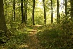 森林春天 库存照片