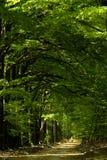 森林春天 免版税库存照片