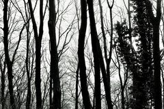 森林是奥秘 免版税库存图片
