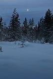 森林晚上雪 免版税库存照片