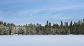 森林晚上雪 免版税库存图片