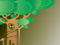 森林晚上 免版税图库摄影