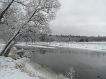 森林晴朗的冬天 免版税库存图片