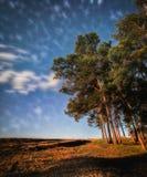 森林暮色夜照片-看星银河 免版税库存照片