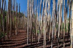森林曲调 库存图片