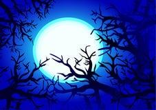 森林月亮晚上 库存照片