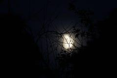 森林月亮 库存图片