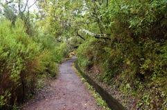 森林月桂树马德拉岛 免版税库存图片