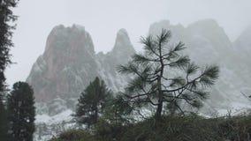 森林有薄雾的冬天 股票录像
