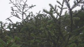 森林有薄雾的冬天 股票视频