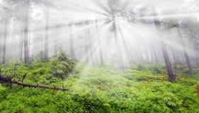 森林有薄雾的山 免版税库存图片