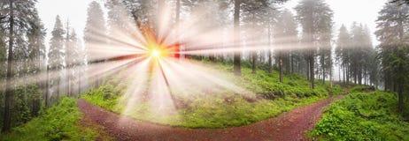 森林有薄雾的山 库存图片