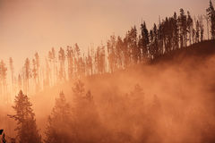 森林有薄雾的日出黄石 库存图片