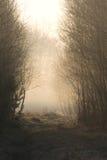 森林有薄雾的早晨路径 免版税图库摄影