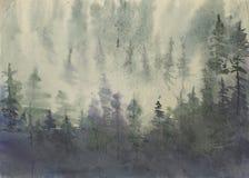 森林有薄雾的杉木 库存照片