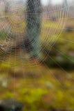 森林有薄雾的蜘蛛网 免版税库存图片