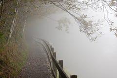 森林有薄雾的路径 库存图片