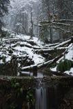 森林有薄雾的风景雪谷冬天 免版税库存图片