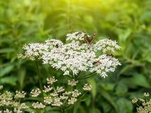 森林有蝴蝶和蜂的花植物 库存图片