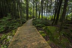 森林木板走道 库存图片