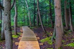 森林木板走道 库存照片