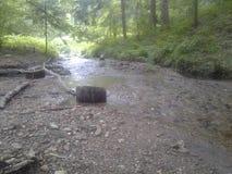 森林木石自然溪 免版税库存图片