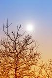 森林本质星期日冬天 冬天森林风景在早期的冬天早晨 免版税库存图片