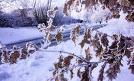森林本质星期日冬天 冬天在早期的冬天早晨落叶冷淡的草的森林风景在冬天降雪和温暖的阳光下 免版税库存图片