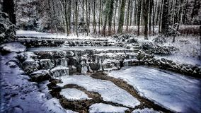 森林本质星期日冬天 免版税库存照片