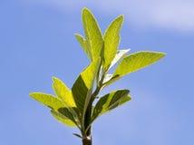 森林杉木顶层结构树 免版税库存图片