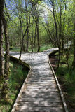 森林板步行 免版税库存图片