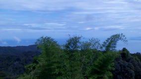 森林林木背景 背景绿色横向现代本质向量 股票视频
