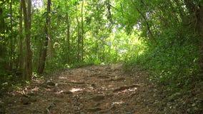森林林木背景 背景绿色横向现代本质向量 原野 影视素材