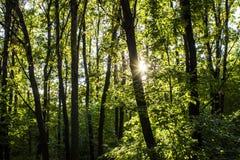 森林林木背景 背景绿色横向现代本质向量 原野 免版税库存照片